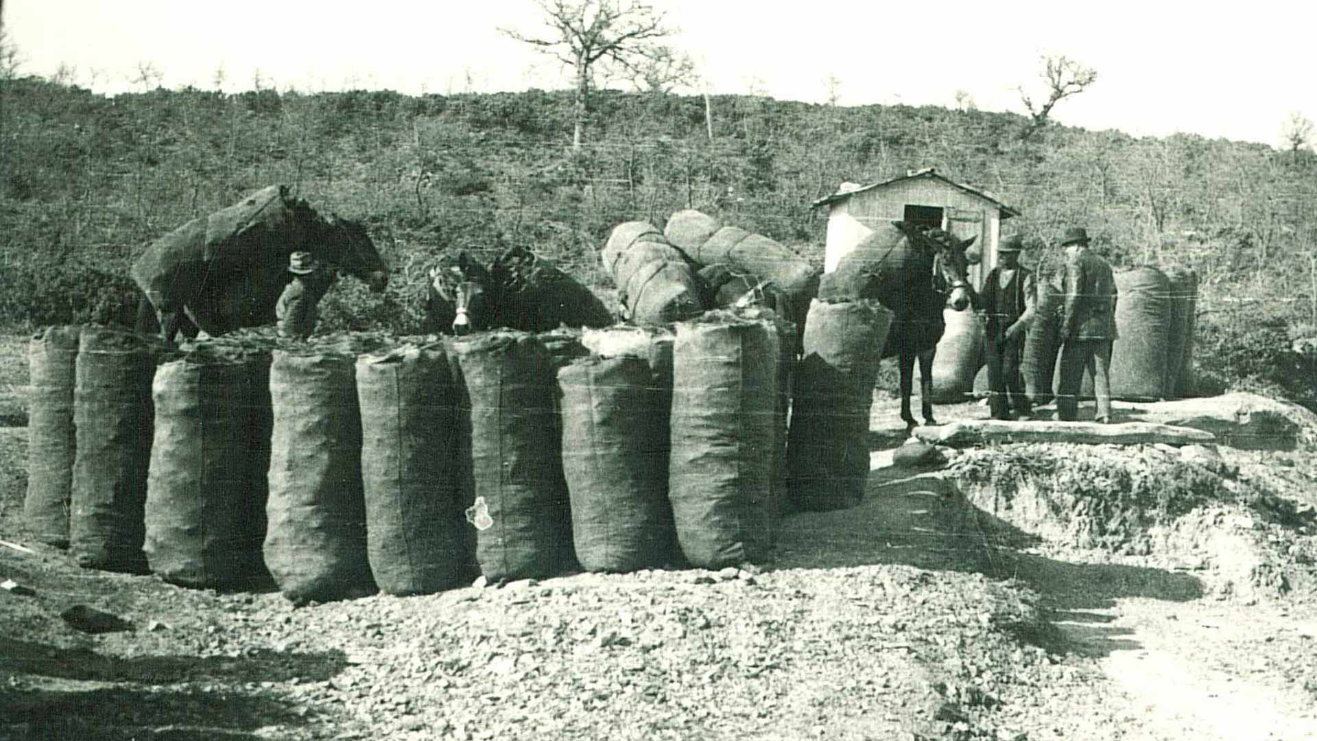 Raccolta carbone. Archivio fotografico Margaritelli.