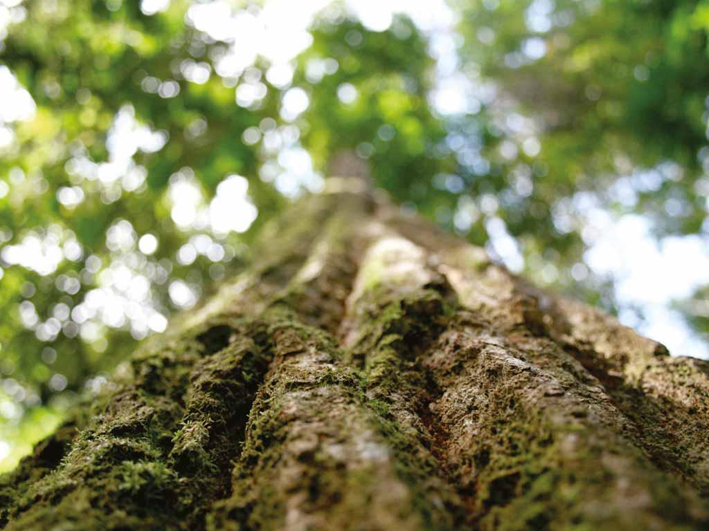 albero foresta borgogna francia parquet