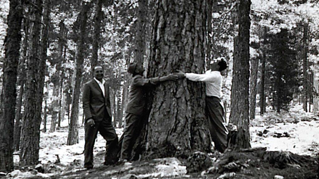 foresta Margaritelli